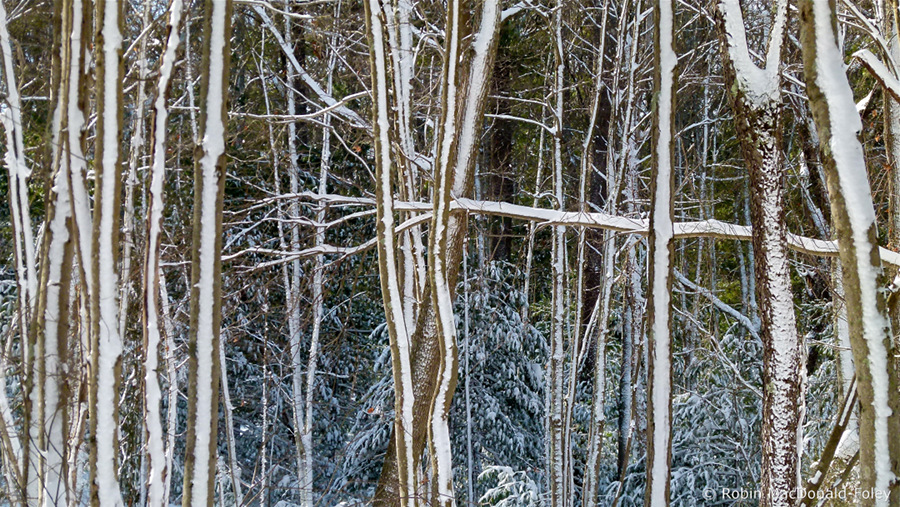 TreeStripesWatermark900x507