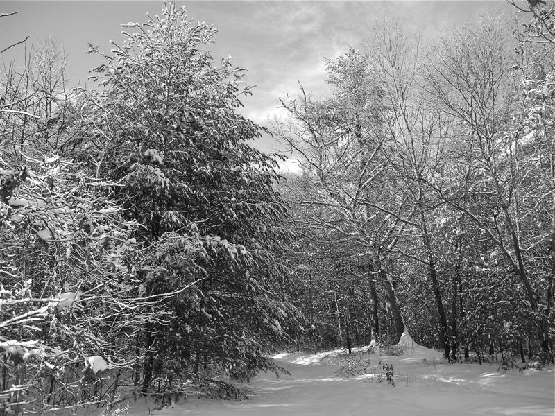 WinterBlog12