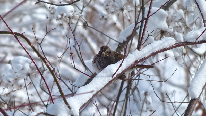 Bird800_1